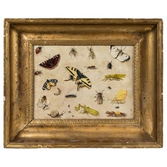 17th Century, Insect Specimen Painting