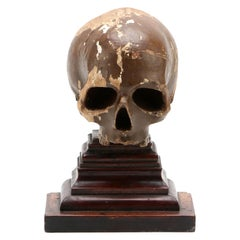 17th Century Italian Momento Mori Skull