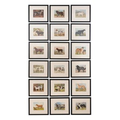 18 Cassell, Petter, Galpin & Co Chromolithograph Dog Prints in Black Frames