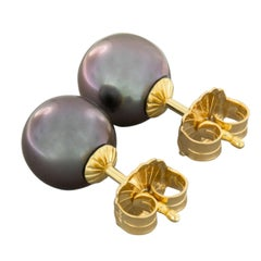 18 Karat Yellow Gold Tahitian South Sea Pearl Stud Earrings