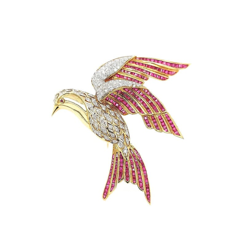 18 kt yellow gold Bird Of Paradise brooch / pendant set with ruby and diamonds. At the back of the jewel a hinge is attached to be used as a pendant when wanted.  There are more than three dozen species in the family Paradise , which is why they are