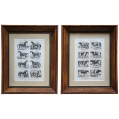 1873 Antique Breeds of Horses and Cattle Black & White Engraving Cows Distressed