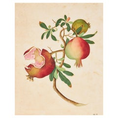 18th Century Chinese School Botanical Watercolor