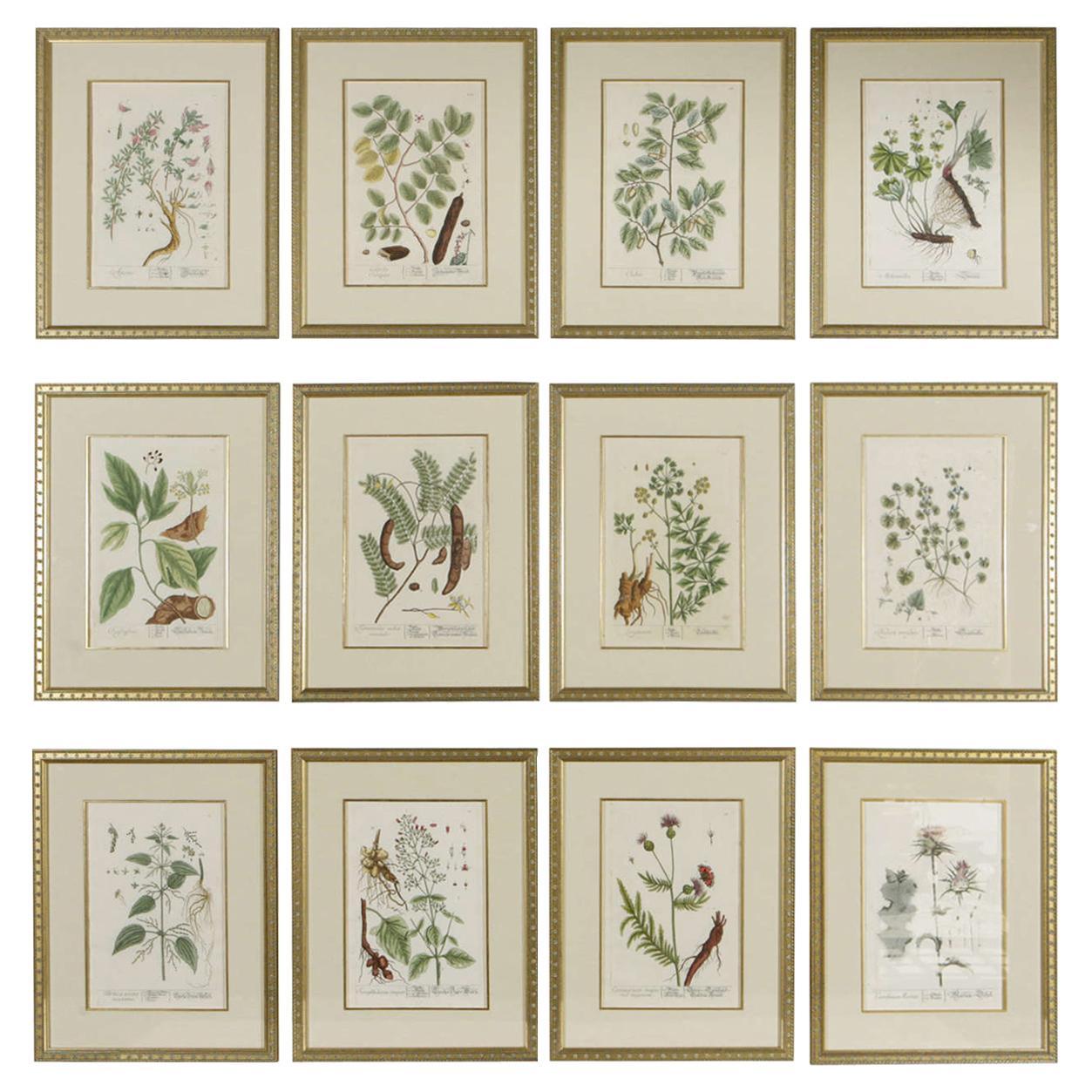 18th Century Framed Botanical Prints