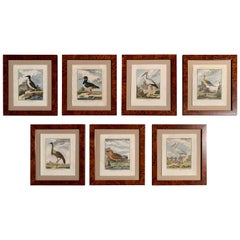 18th Century French Bird Watercolors Wall Pictures, Set of Seven Frames