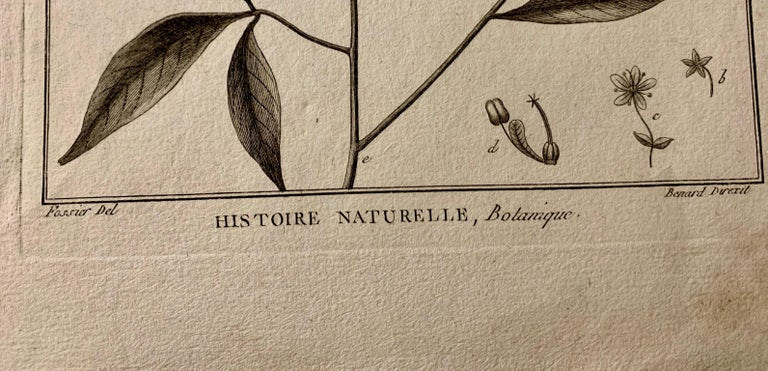 18th Century French  Buffon botanical prints Composition with black frame For Sale 1