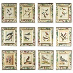 18th Century French Engravings of Birds