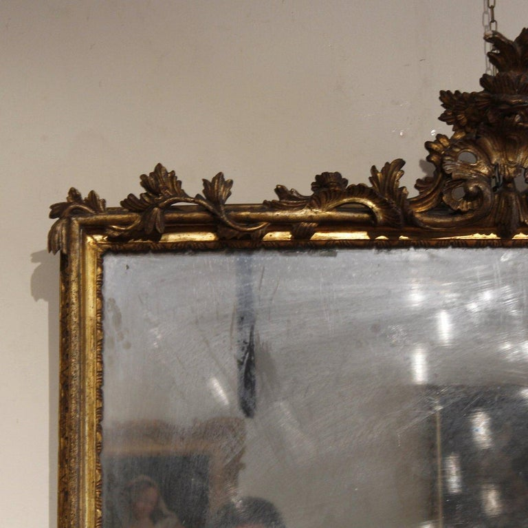 An impressive pair of Louis XV mirrors, the quality of the carving and the mirrors originally of the period make these two pieces a really pair of artworks.