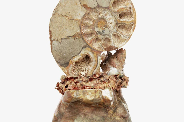 Rococo 18th Century Italian Bases with Polished Fossil Ammonites For Sale