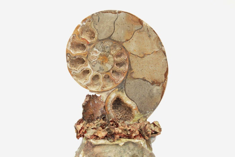 18th Century Italian Bases with Polished Fossil Ammonites For Sale 2