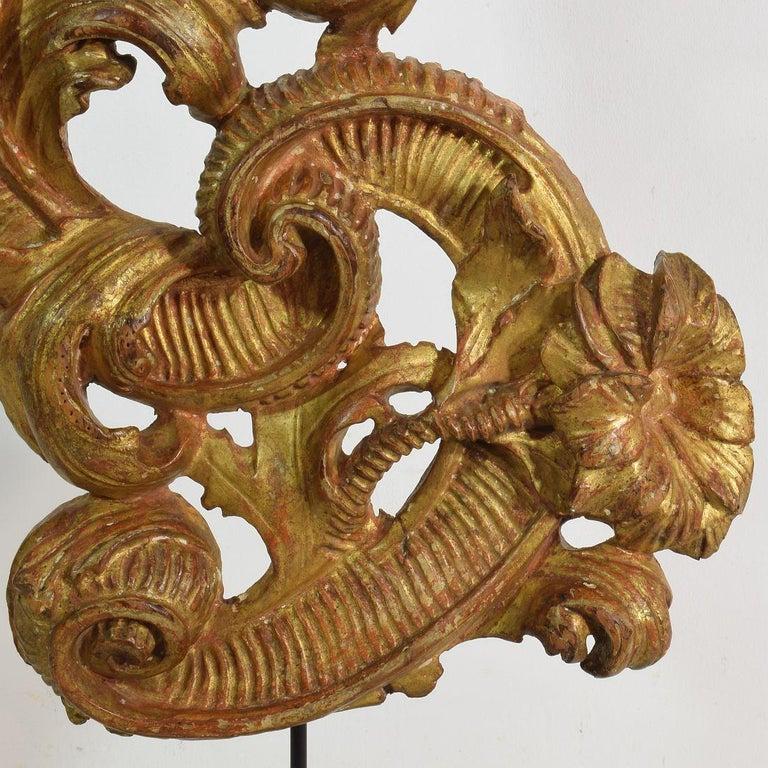18th Century Italian Giltwood Baroque Curl Ornament For Sale 10