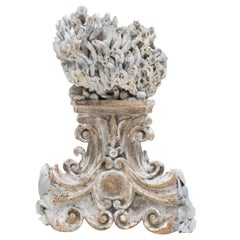 18th Century Italian Hand Carved Base with Siliquaria and Fossil Shells