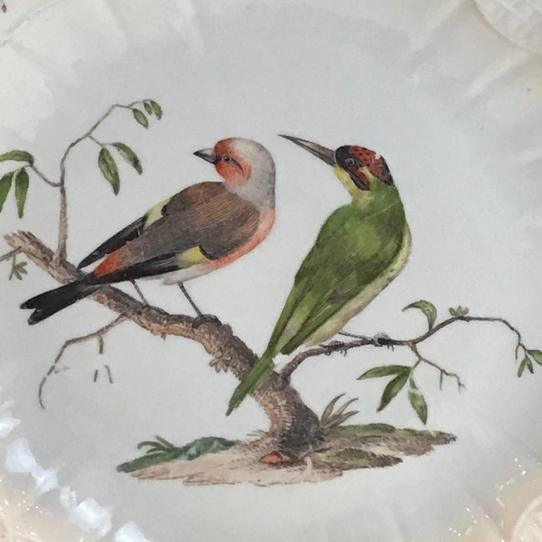 18th century Meissen ornithological charger, decorated with two exotic birds seated on a tree stump surrounded by scattered insects, a moulded neu-ozier border to the gilt-edged wavy rim.