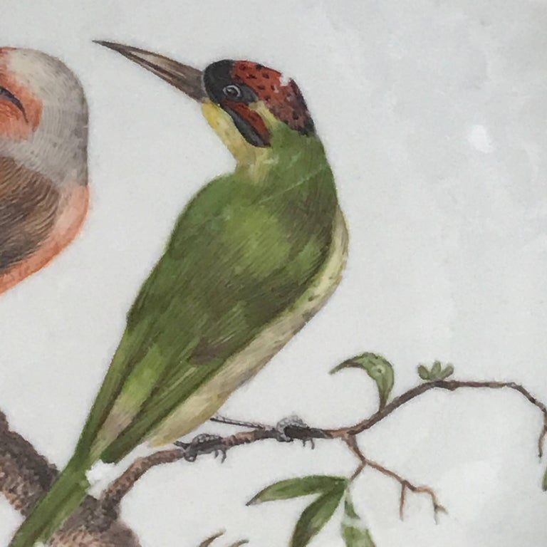 18th Century Meissen Ornithological Charger In Good Condition For Sale In West Palm Beach, FL