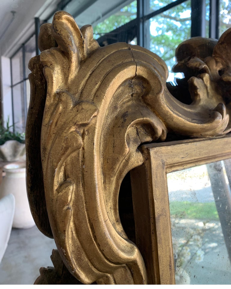 18th Century Rococo Italian Hand Carved Gilt Pair Of Mirrors For Sale 12