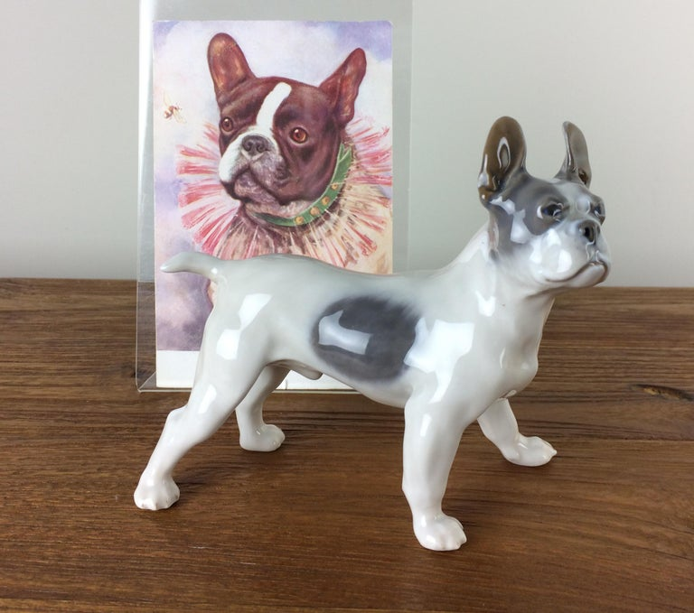 1920s Royal Copenhagen Porcelain Bulldog Figurine, Boston Terrier In Excellent Condition For Sale In Antwerp, BE