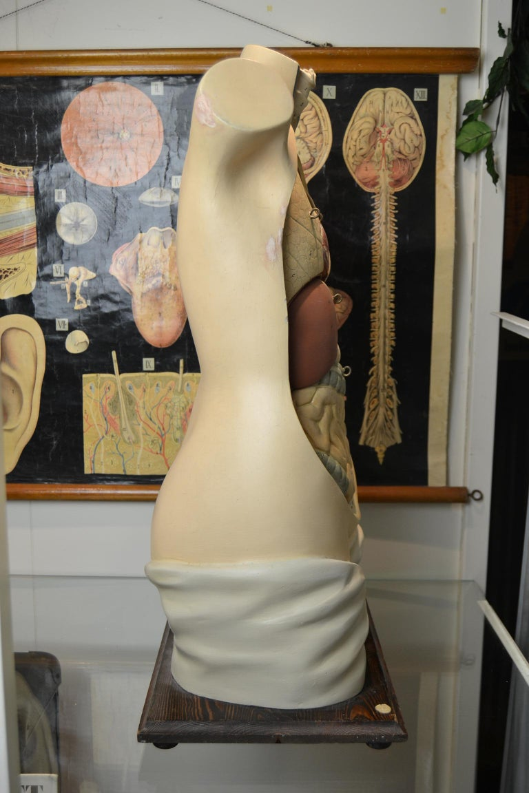 1930s  Anatomical Torso - Didactic - Educational -  Germany  For Sale 8