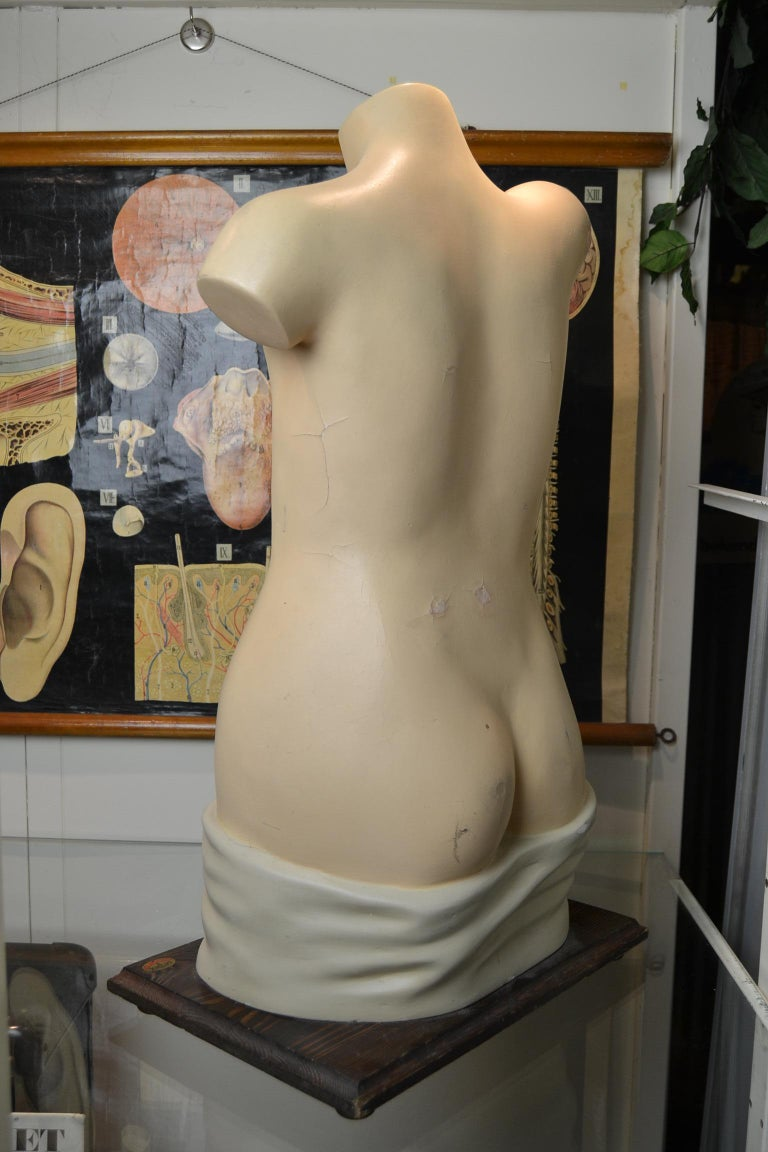 1930s  Anatomical Torso - Didactic - Educational -  Germany  For Sale 13