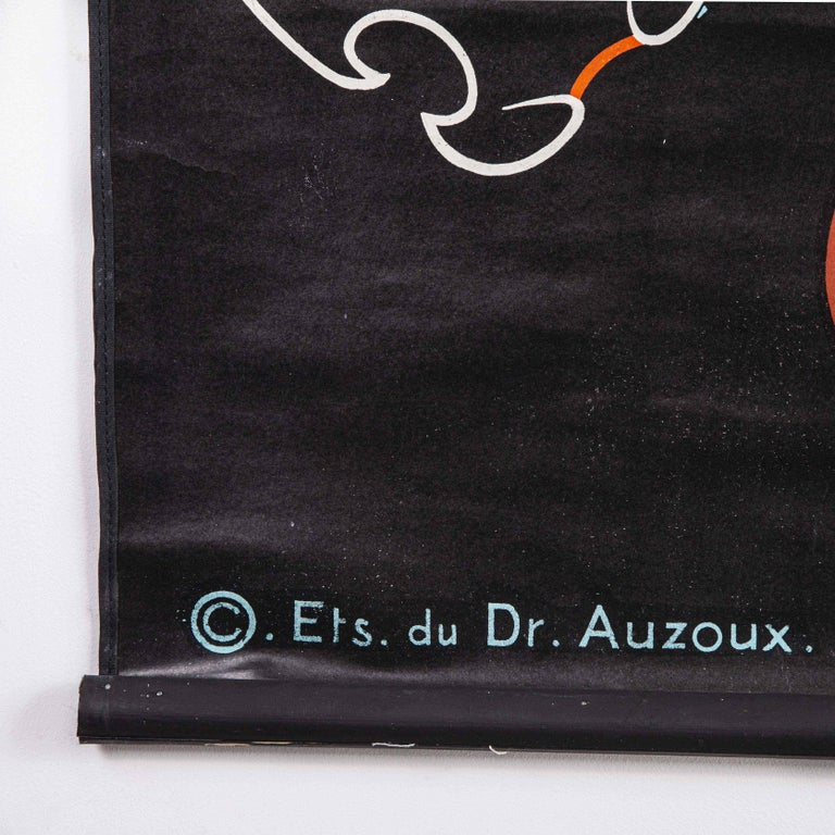 1947 Dr. Auzoux French Educational Chart, P. Sougy, Taupe, Set of 17 For Sale 1