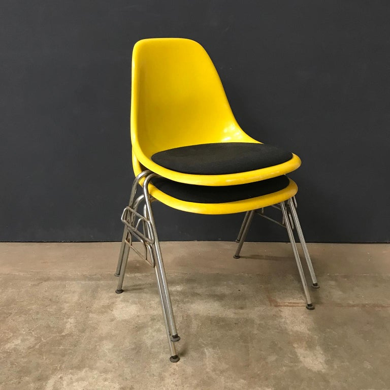 Two Yellow Shells by Eames with black cushions. The chairs show traces of wear like one chairs has some changing of color (#10- #12), some scratches and one shell has a white stripe (#16) on the front of the seat. The black cushions show slightly a