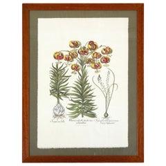 "1950s Botanical Drawing ""Edizioni d'arte Remondini"""