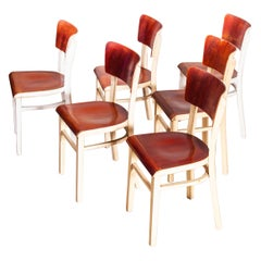 1950s Classic Elegant Bentwood Painted Dining Chair by Thon