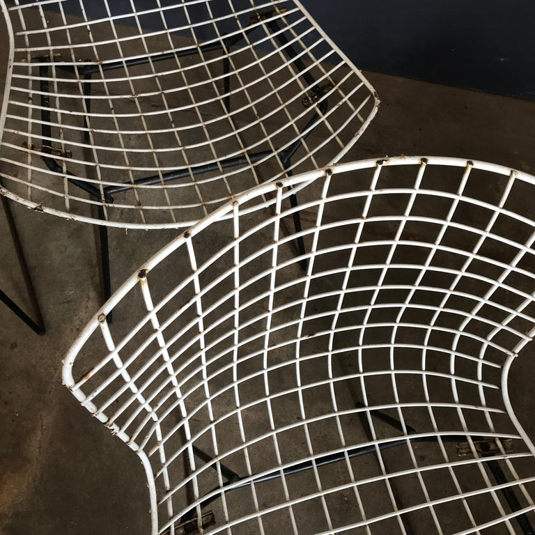 Metal 1952, Harrie Bertoia for Knoll International a Set of Wire Dining Chairs For Sale