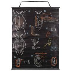 1953 Dr Auzoux French Educational Chart, P.Sougy, Le Hanneton 'Scarab Beetle'