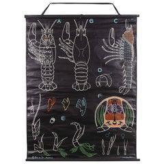 1958 Dr Auzoux French Educational Chart, P.Sougy, L'Ecrevisse 'Crayfish' S57