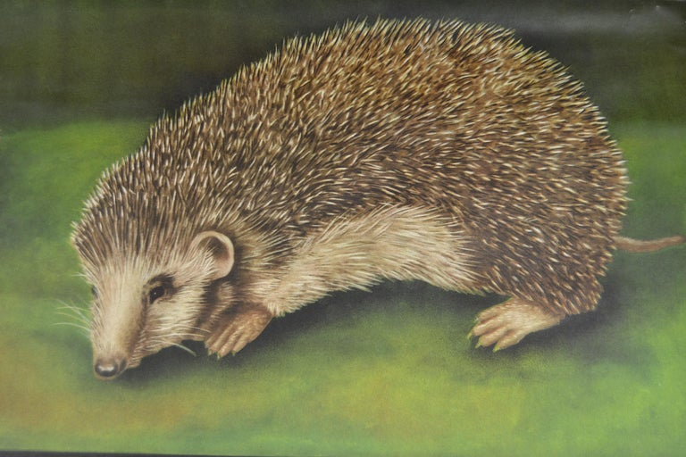 20th Century 1960s Canvas Wall School Chart of the Hedgehog by Jung Koch Quentell For Sale