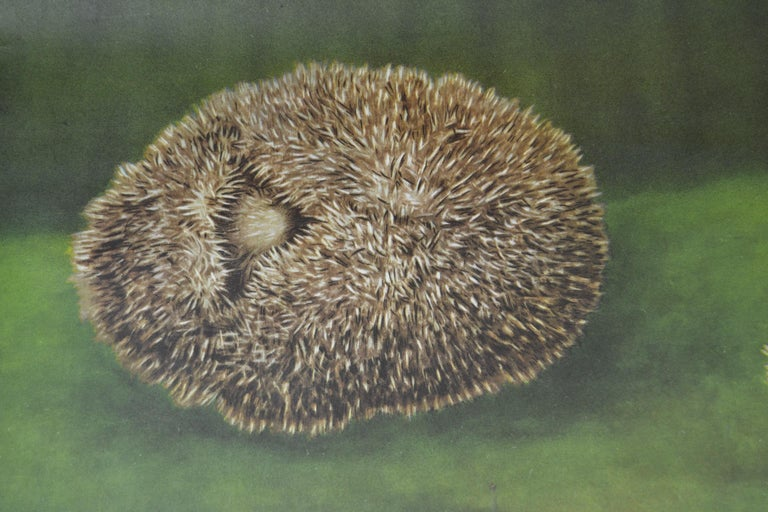 1960s Canvas Wall School Chart of the Hedgehog by Jung Koch Quentell For Sale 1