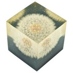 1960s Dandelion Resin Art Paperweight Vintage McM Modern Flower Power Gift