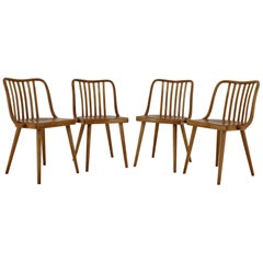 1960s Set of Four Antonin Suman Dining Chairs, Czechoslovakia