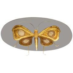 1970 Coffee Table Butterfly Illuminating DLG D. Brasseur or I. Faure, Fernandez