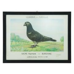 1980s Belgian Pigeon Racing Framed Print