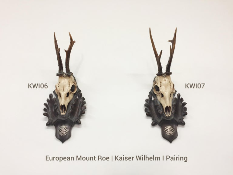 An extraordinary pairing of European Mount Roe Trophies, attributed to Kaiser Wilhelm I, King of Prussia and the first Emperor (Kaiser) of the United Germans. These 19th century Roe Trophies are mounted on hand-carved Black Forest plaques, featuring