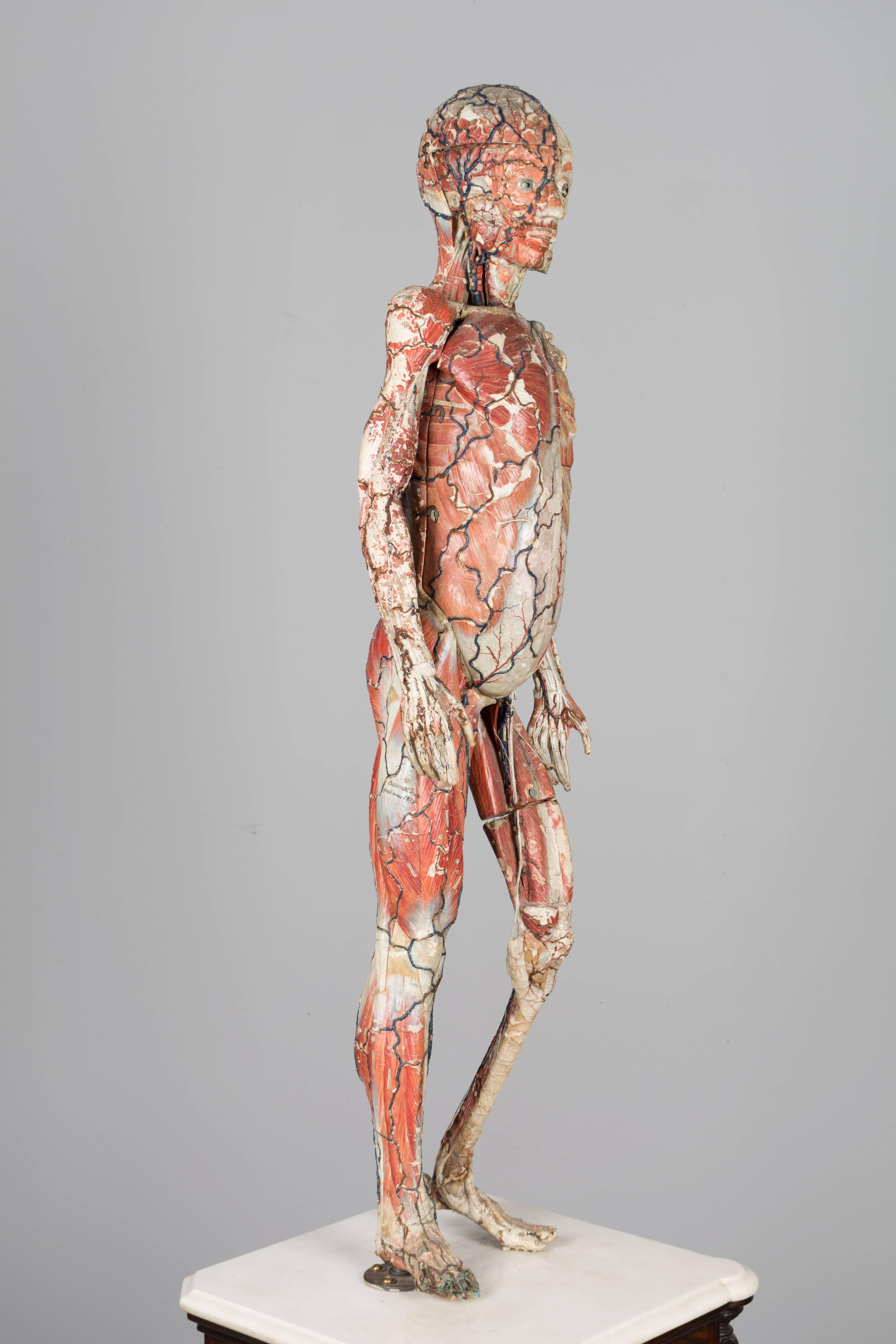 19th Century French Anatomical Model By Dr Auzoux At 1stdibs