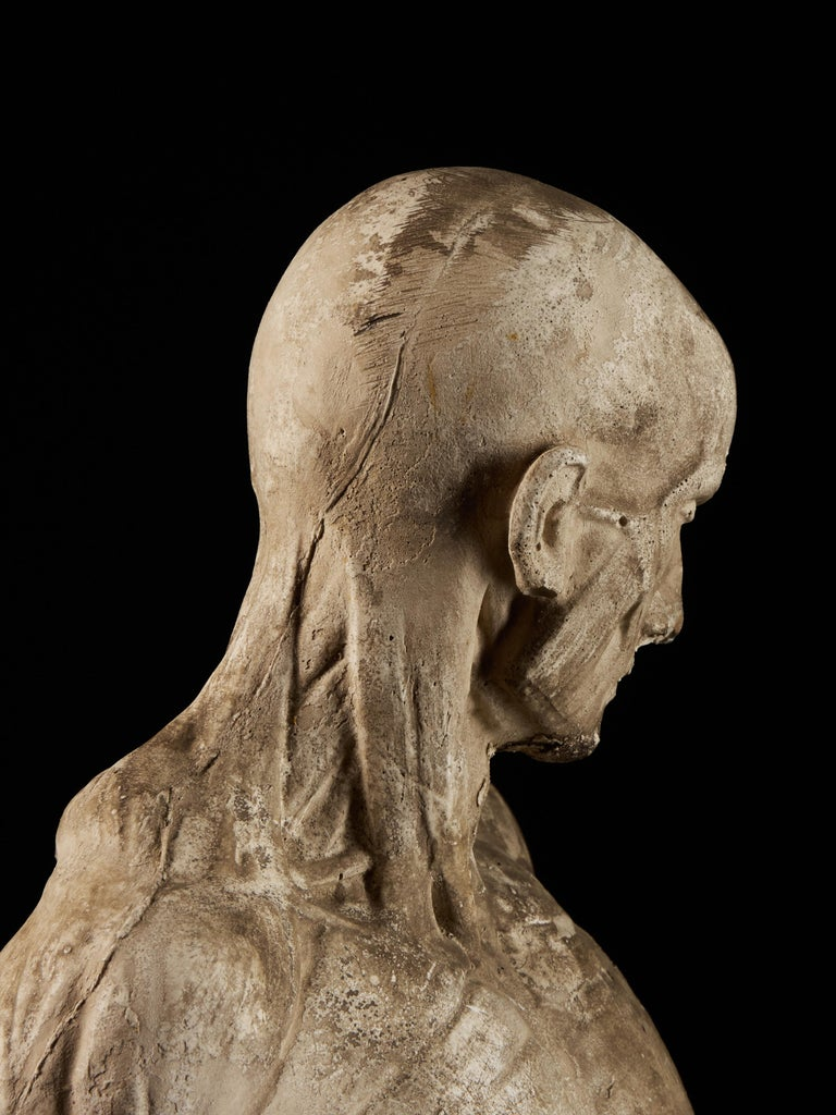 19th Century, Italian School, Two Anatomical Flayed Figures in Plaster For Sale 7