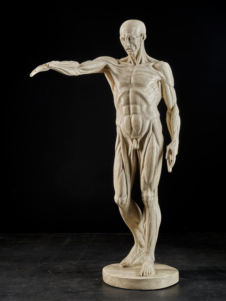19th Century, Italian School, Two Anatomical Flayed Figures in Plaster For Sale 14