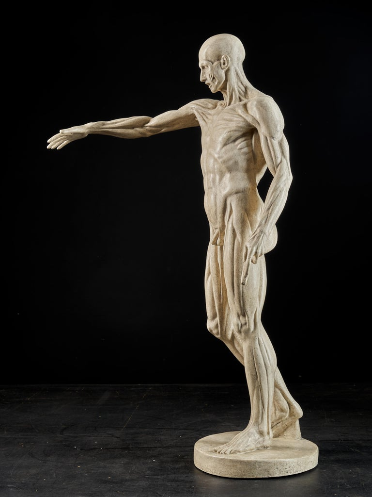 19th Century, Italian School, Two Anatomical Flayed Figures in Plaster For Sale 15