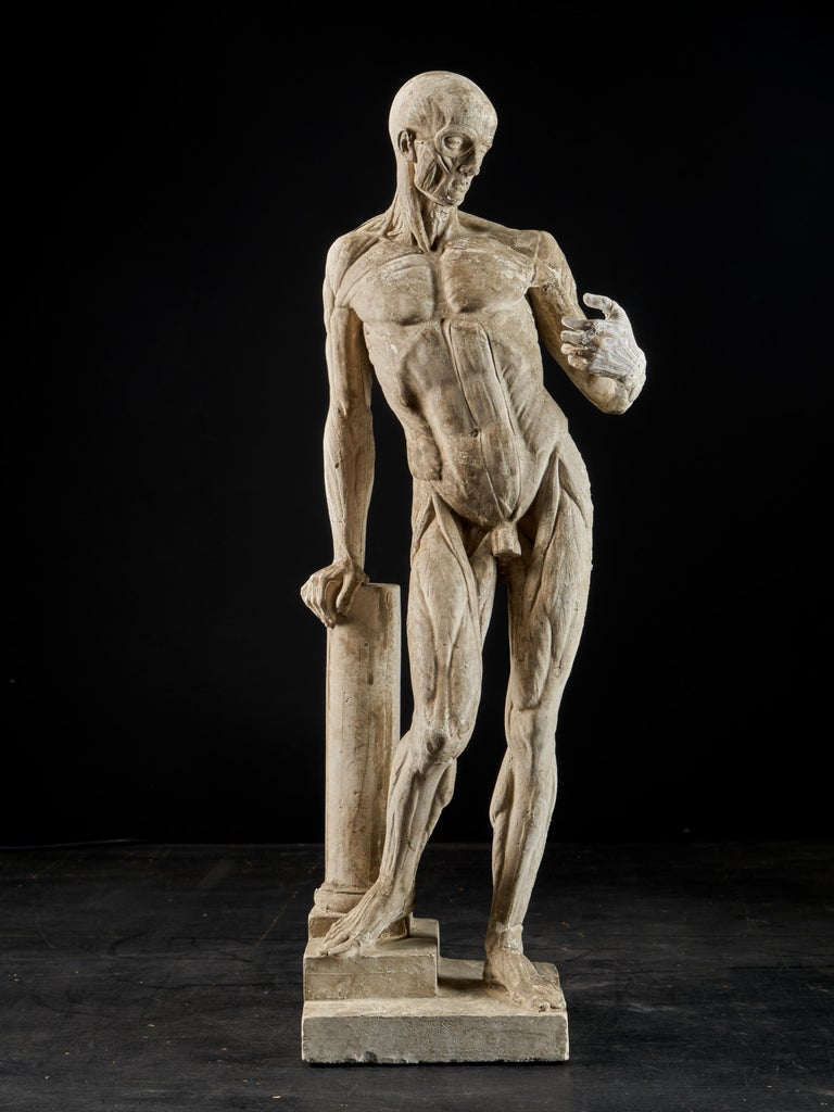 A fine quality flayed or écorche figure taken from the originals by Jean Antoine Houdon (1741-1828).Houdon created his flayed man while in Rome in the 1760s and based it upon the Doryphoros or spear carrier by Polykleitos. It has been used as an