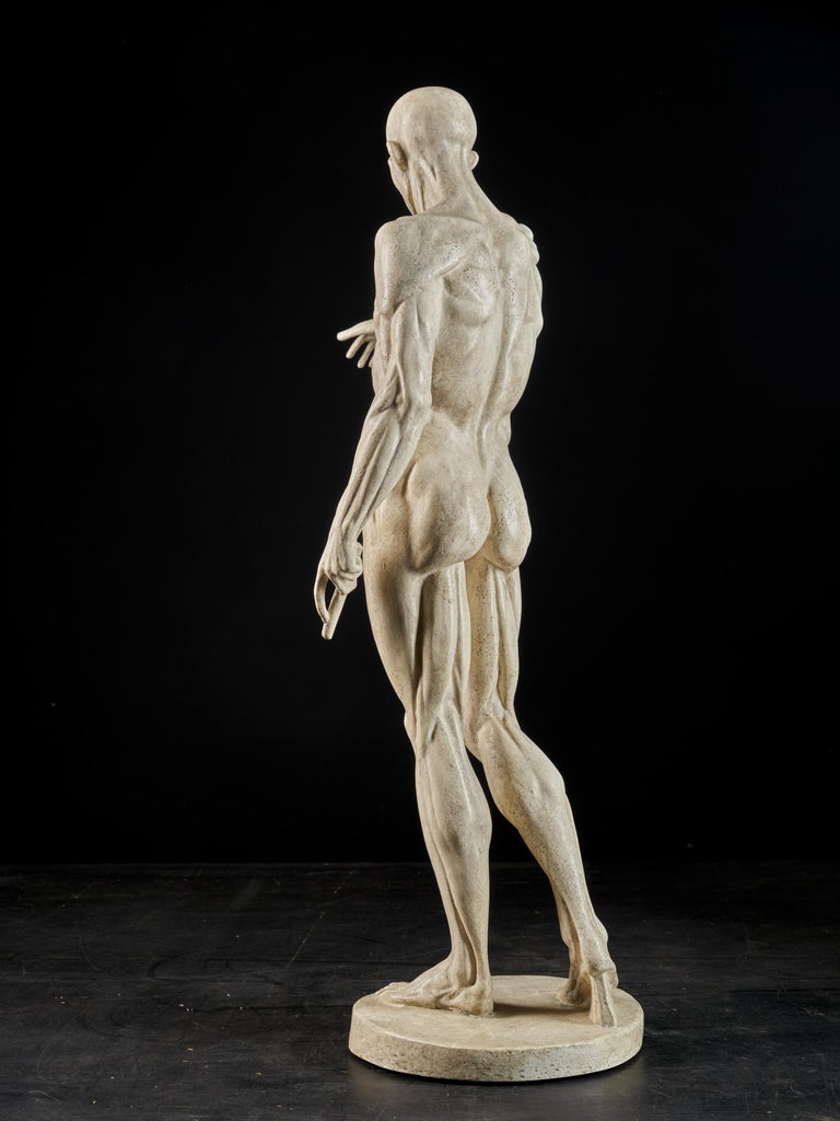 19th Century, Italian School, Two Anatomical Flayed Figures in Plaster For Sale 16