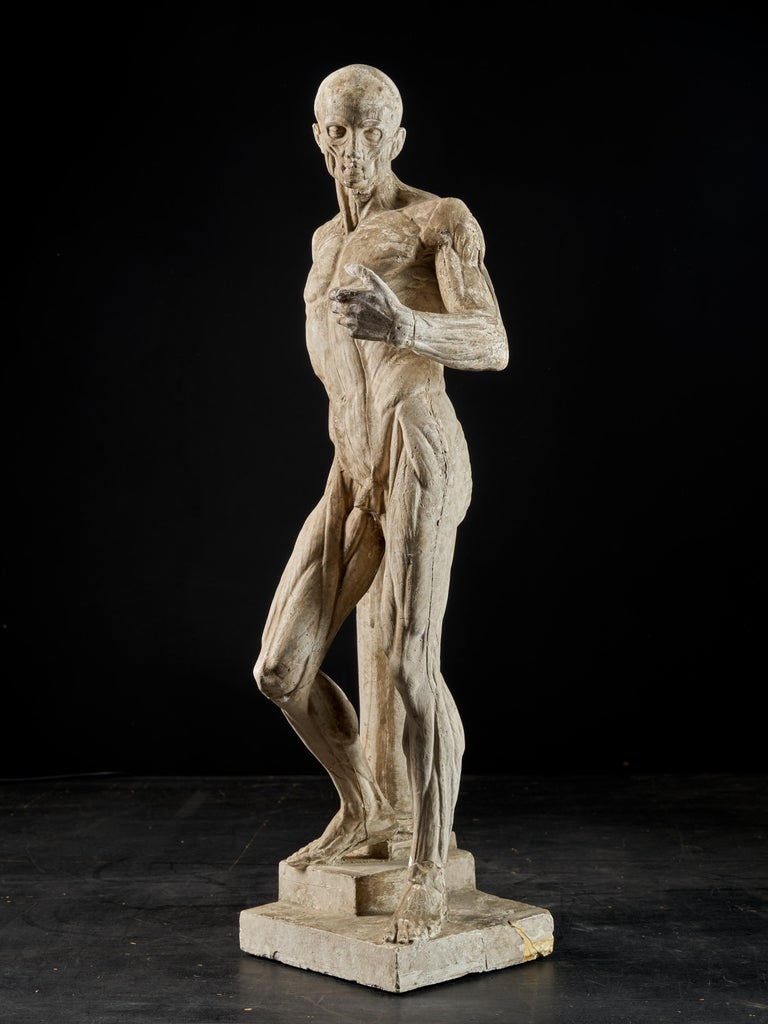 Carved 19th Century, Italian School, Two Anatomical Flayed Figures in Plaster For Sale