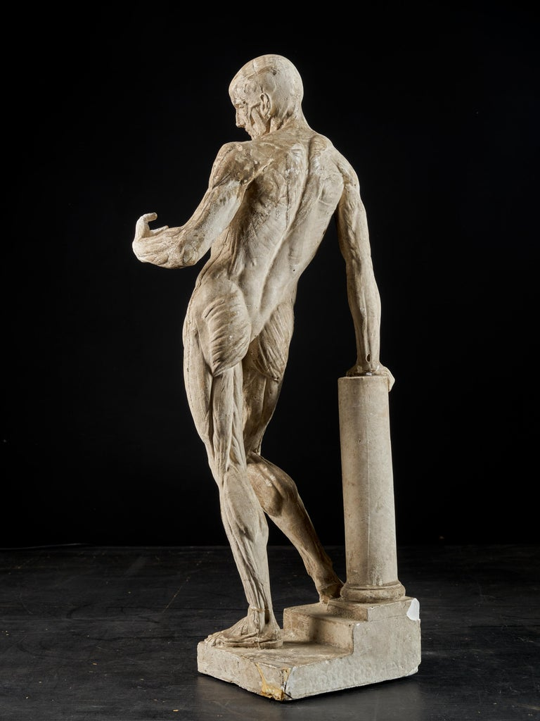 19th Century, Italian School, Two Anatomical Flayed Figures in Plaster For Sale 1