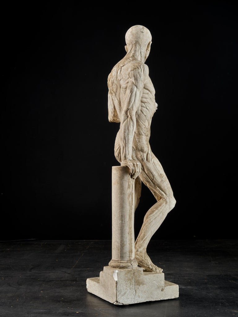 19th Century, Italian School, Two Anatomical Flayed Figures in Plaster For Sale 3