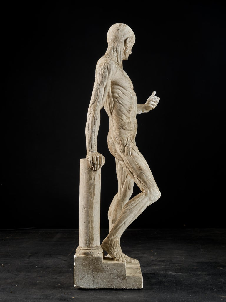 19th Century, Italian School, Two Anatomical Flayed Figures in Plaster For Sale 4
