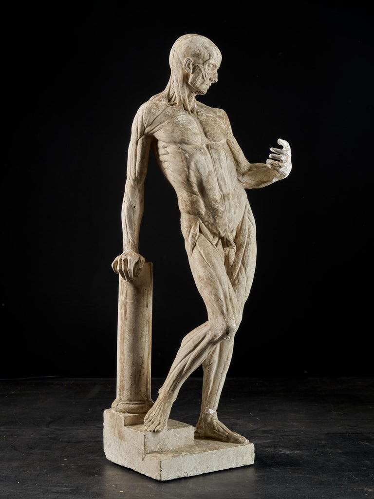 19th Century, Italian School, Two Anatomical Flayed Figures in Plaster For Sale 5
