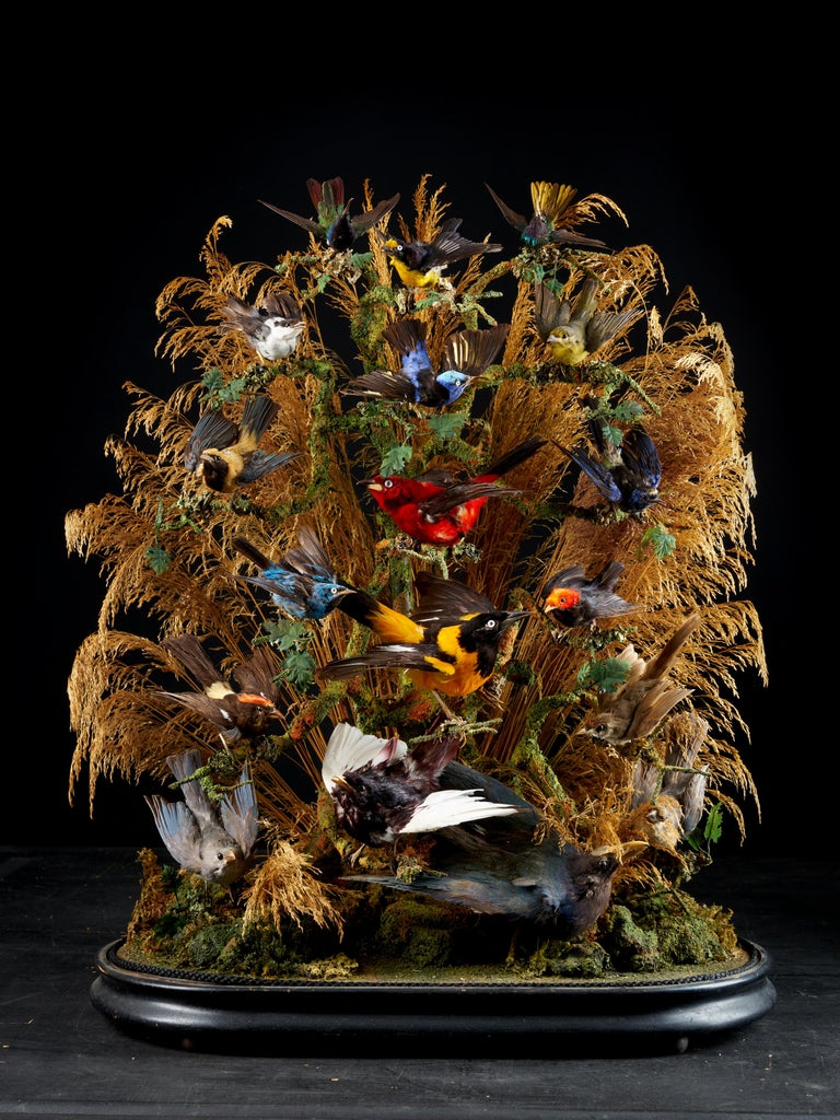 Organic Material 19th Century, United Kingdom, Victorian Dome Filled with 17 Exotic Birds
