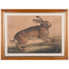 19th Century Antique Engraving of a Hare with Maplewood Frame