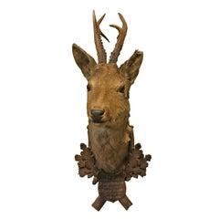 19th Century Austrian Roe Deer Trophy Mount
